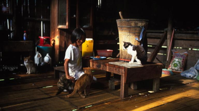 A young girl feeds cats in her kitchen in Kampung Tiong, Bundu.