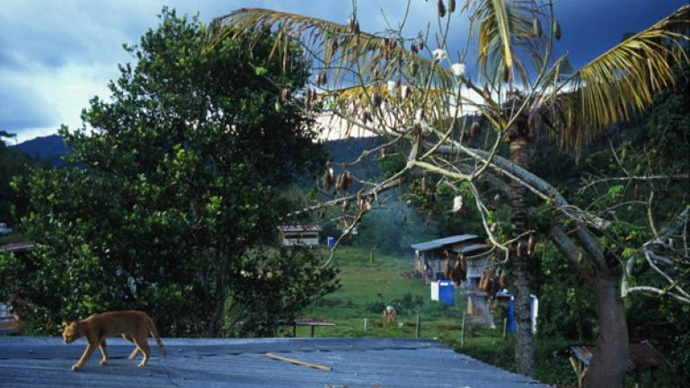 A cat walks along the roof of a house in Kampung Tiong, Bundu.