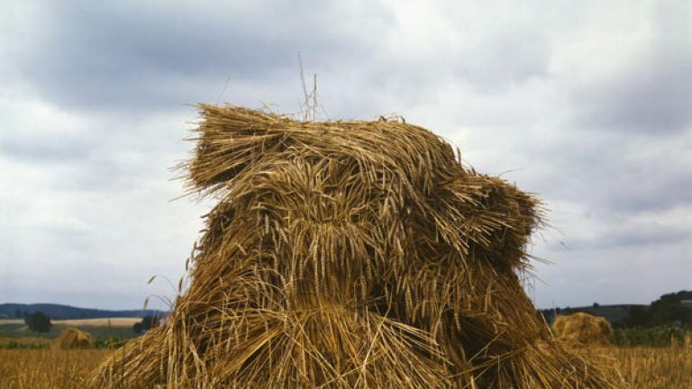 OHN COLLIER. Wheat, Pennsylvania. July 1943.
