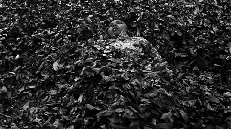 Pilo in leaves, Lampazos de Naranjo, Nuevo León, Mexico, 2016. Photograph by Daniel Ramos, winner of the 2018 Lange-Taylor Prize