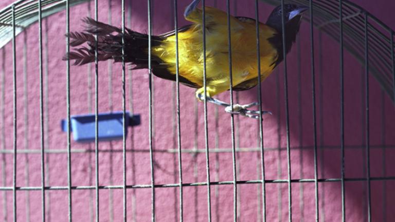 Dear Father, When you are not here, your bird stays in its cage. I worry that he will fly away.--Joana