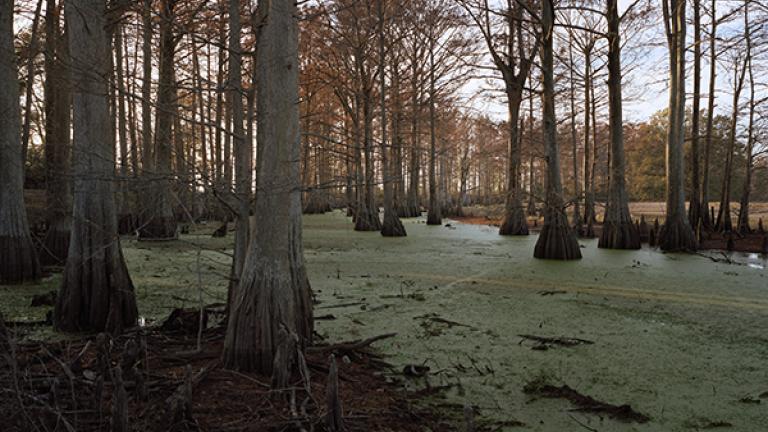 Swamp,Midnight,Mississippi,2007. Photograph by Jessica Ingram.