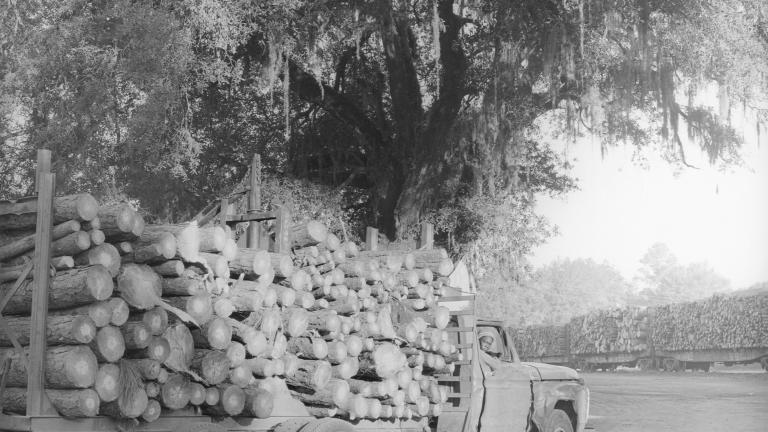 Pulpwood truck, 1984. Photograph by Paul Kwilecki.