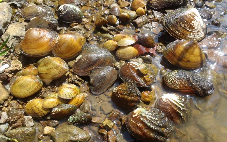 A photo of mussels.